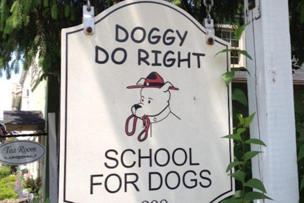 Doggy Do Right