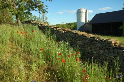 Loudoun County's Heritage Stone Walls