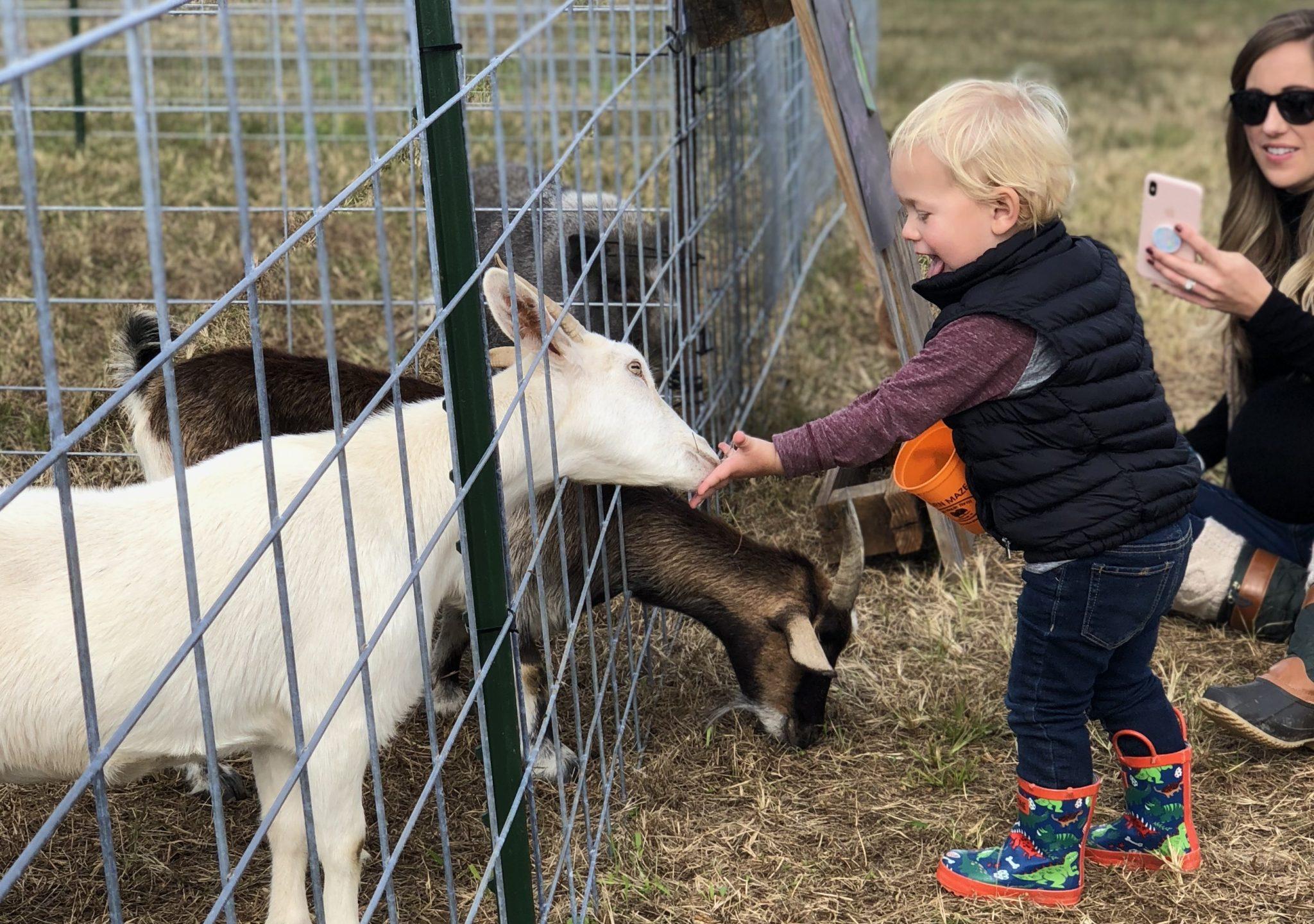 Fall Farm Tour goat and child mom photo