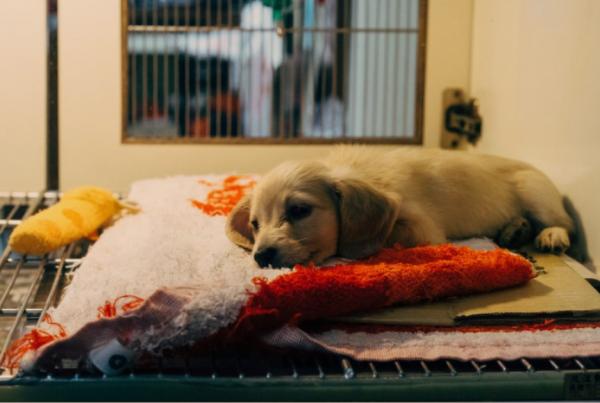 animal shelter dog puppy pet